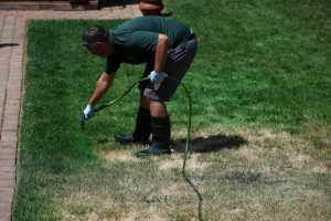A creative Californian solution: paining the lawn green
